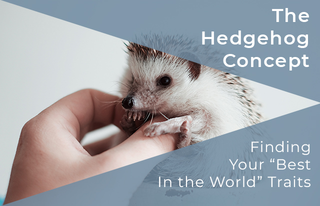 Hedgehog Concept Blog Feature Image